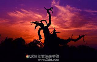 王景荣摄影作品